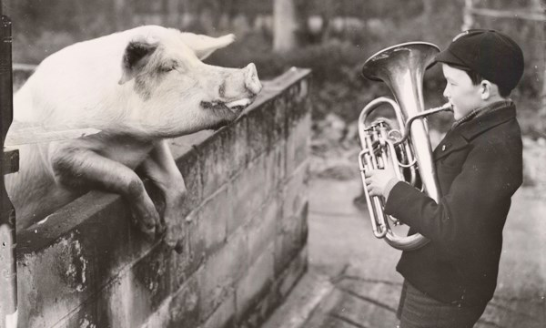 Boy playing brass instrument to a pig